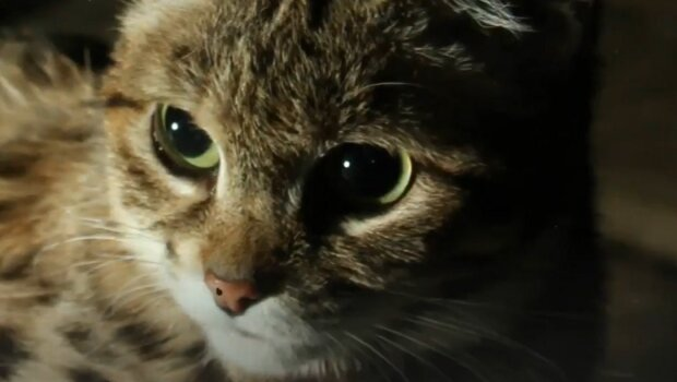 Screenshot: YouTube / Kitty County