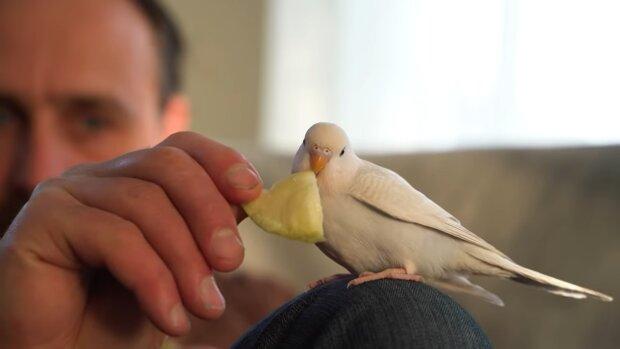 Screenshot: YouTube / A Chick Called Albert