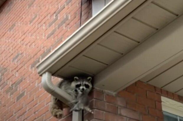 Screenshot: YouTube / Gates Wildlife Control