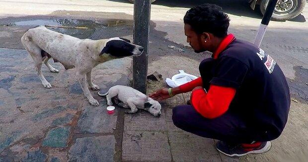 Screenshot: YouTube / Animal Aid Unlimited, India