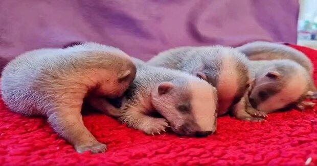 Screenshot: Facebook / Cuan Wildlife Rescue