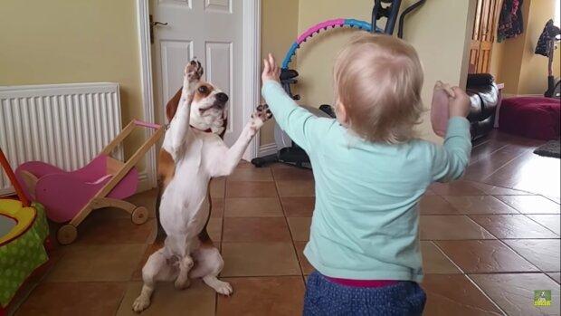 Screenshot: YouTube / Charlie The Beagle