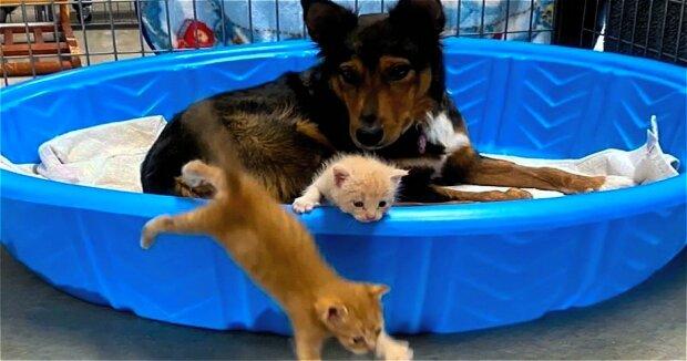 Screenshot: YouTube / GeoBeats Animals