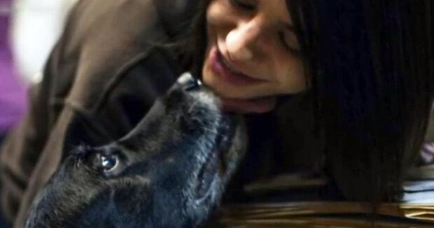 Screenshot: YouTube / My Pets
