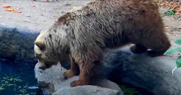Screenshot: YouTube / Animal Wire