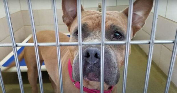 Screenshot: YouTube /  Friends of the Cuyahoga County Animal Shelter