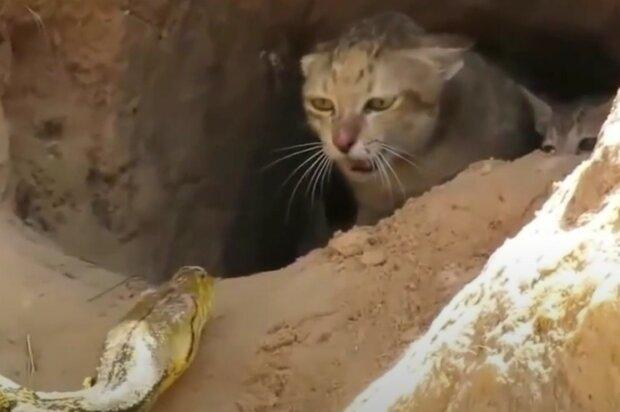 Screenshot: Youtube / Best Of Wildlife