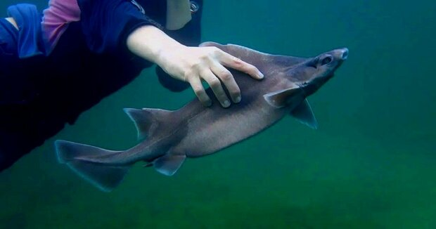 Screenshot: YouTube / Sharklab Malta