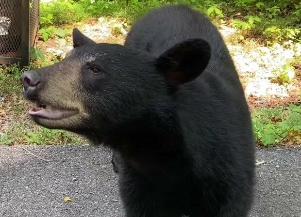 Screenshot: Facebook / Appalachian Bear Rescue
