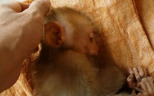 Screenshot: YouTube / Monkey Baby
