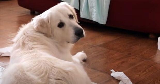 Screenshot: YouTube / Funny Dog Bailey