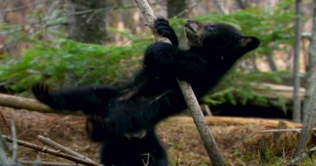 Screenshot: YouTube / Nature on PBS