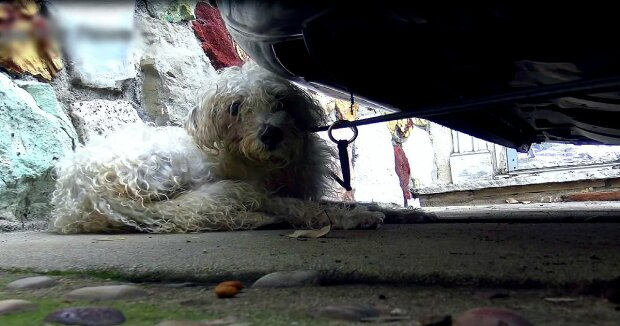 Screenshot: YouTube / Hope For Paws - Official Rescue Channel