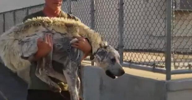 Screenshot: YouTube / Animals tube