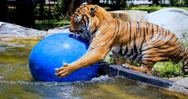 Screenshot: YouTube / Naples Zoo