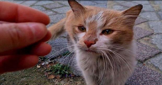 Screenshot: YouTube / The World of Cats
