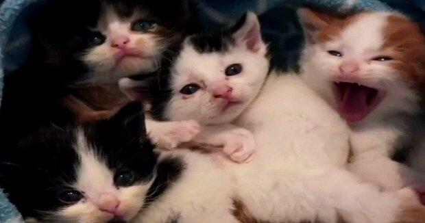 Screenshot: YouTube / Love Meow