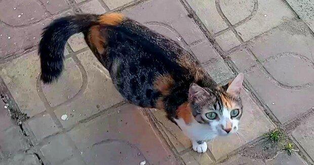 Screenshot: YouTube / Cute Street Cats