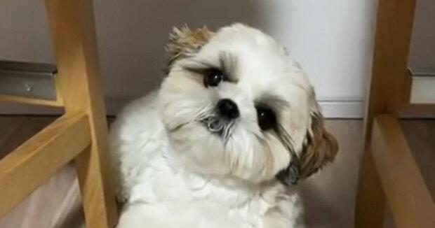 Screenshot: YouTube / Puppies Club