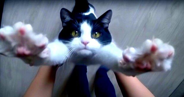 Screenshot: YouTube / CatPusic