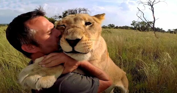Screenshot: YouTube / The Lion Whisperer
