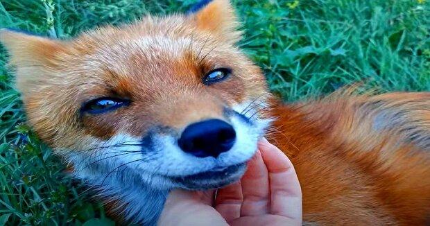 Screenshot: YouTube / Funny Foxy Pride