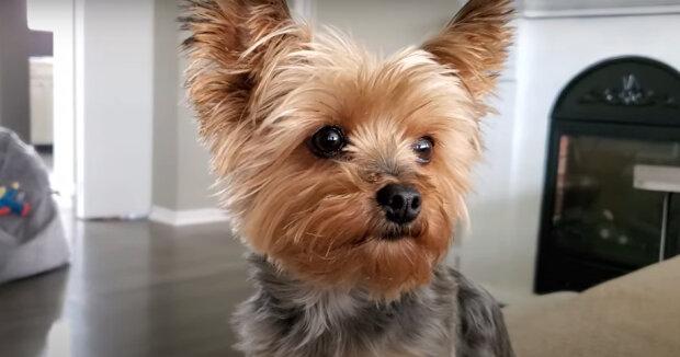 Screenshot: YouTube / Gracie the Puppy Dog