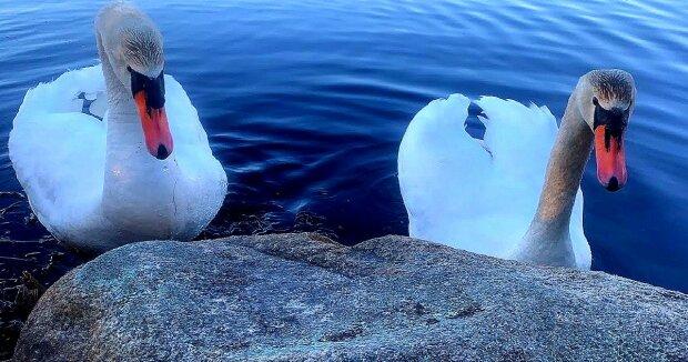 Screenshot: YouTube / Secret Life Of Swans By Xavier