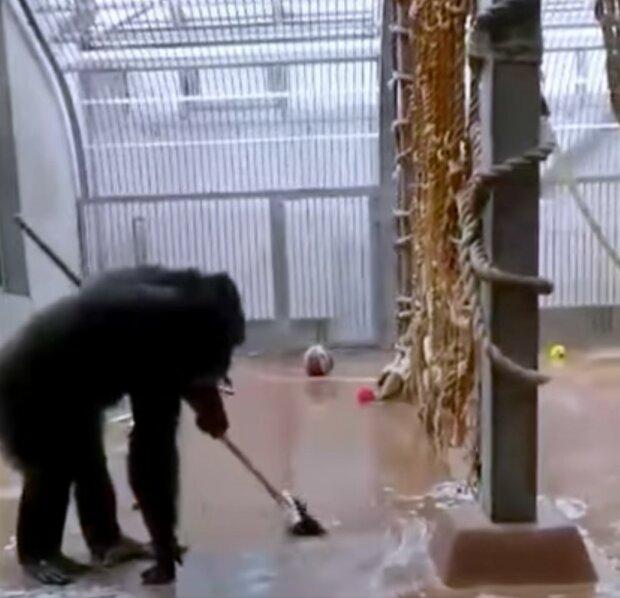 Screenshot: Facebook / Tallinna Loomaaed / Tallinn Zoo