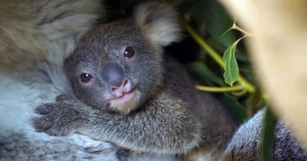 Screenshot: YouTube / Symbio Wildlife Park