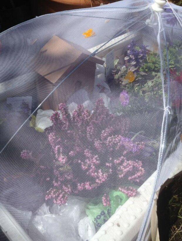 Foto: lemurov.net