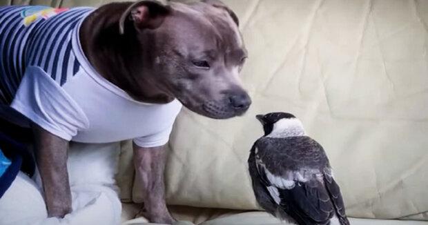 Screenshot: YouTube / Cute Dodo