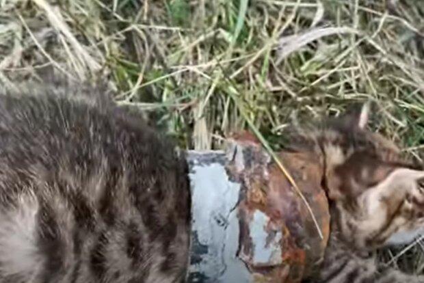 Screenshot: YouTube / Rescue Animals