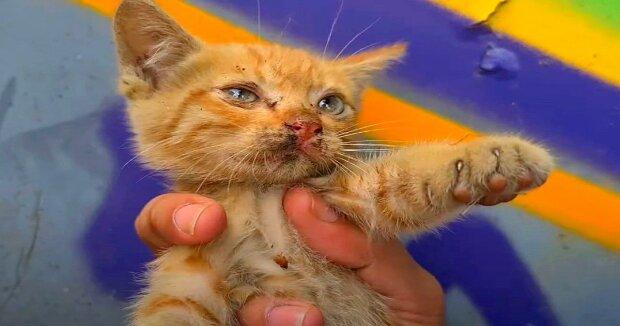 Screenshot: YouTube / SnikoPaws Cat Video - Cats Meowing