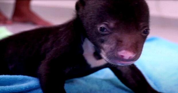 Screenshot: YouTube / Free The Bears