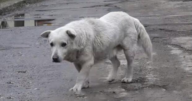 Screenshot: YouTube / Howl Of A Dog