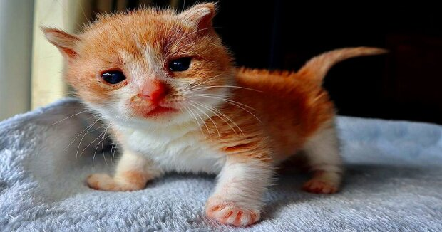 Screenshot: Instagram / kitten.fosters