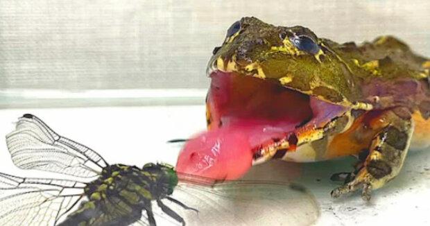 Screenshot: YouTube / Frog Time