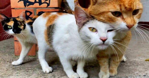Screenshot: YouTube / Cats Around Us