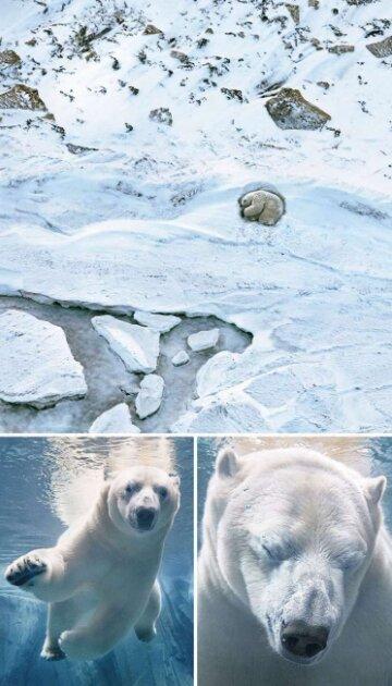 Foto: storyfox.ru