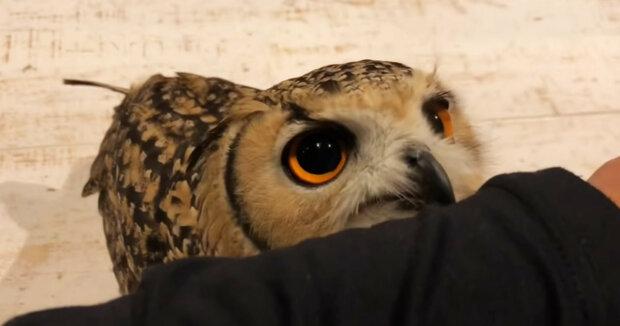 Screenshot: YouTube / GEN3 OWL CHANNEL
