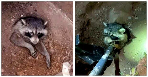 Screenshot: Facebook / Wild West Wildlife Rehabilitation Center