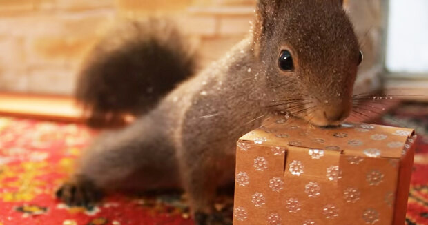 Screenshot: YouTube / Movie Squirrels