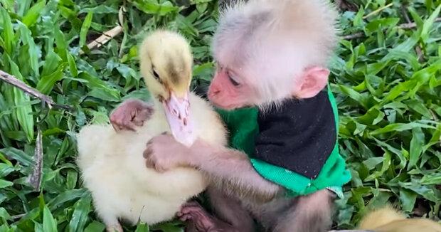 Screenshot: YouTube / Animals Home