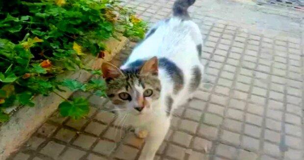 Screenshot: YouTube / CATS LOVERS