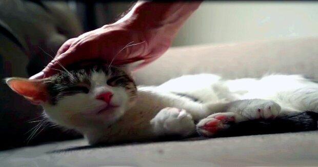 Screenshot: YouTube / Flatbush Cats