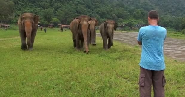 Screenshot: YouTube / elephantnews