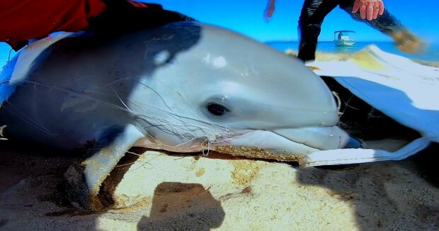 Screenshot: YouTube / Dolphin Discovery Centre TV