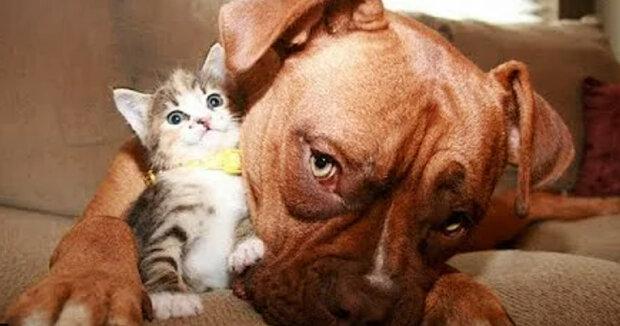 Screenshot: YouTube / Funny And Cute Kitten Cat