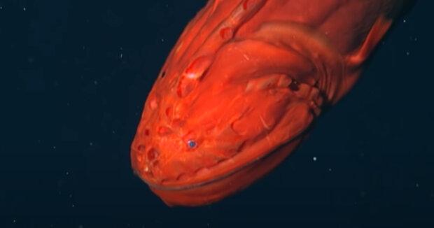 Screenshot: YouTube / Monterey Bay Aquarium Research Institute (MBARI)